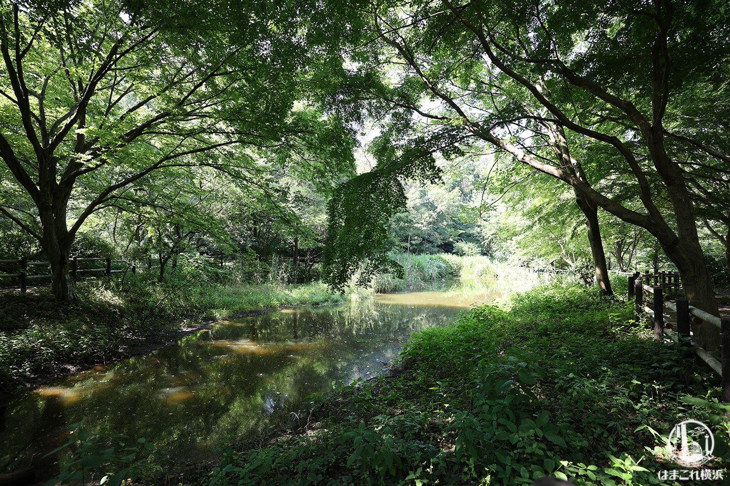 舞岡公園 水辺