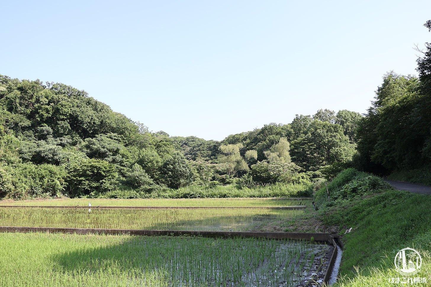 舞岡公園 田園風景
