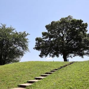 横浜のゆずの木・清水ヶ丘公園はゆずの聖地!ドラマや映画、CMでも見かける木