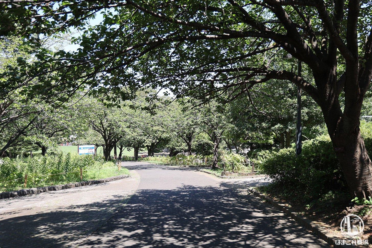 清水ヶ丘公園
