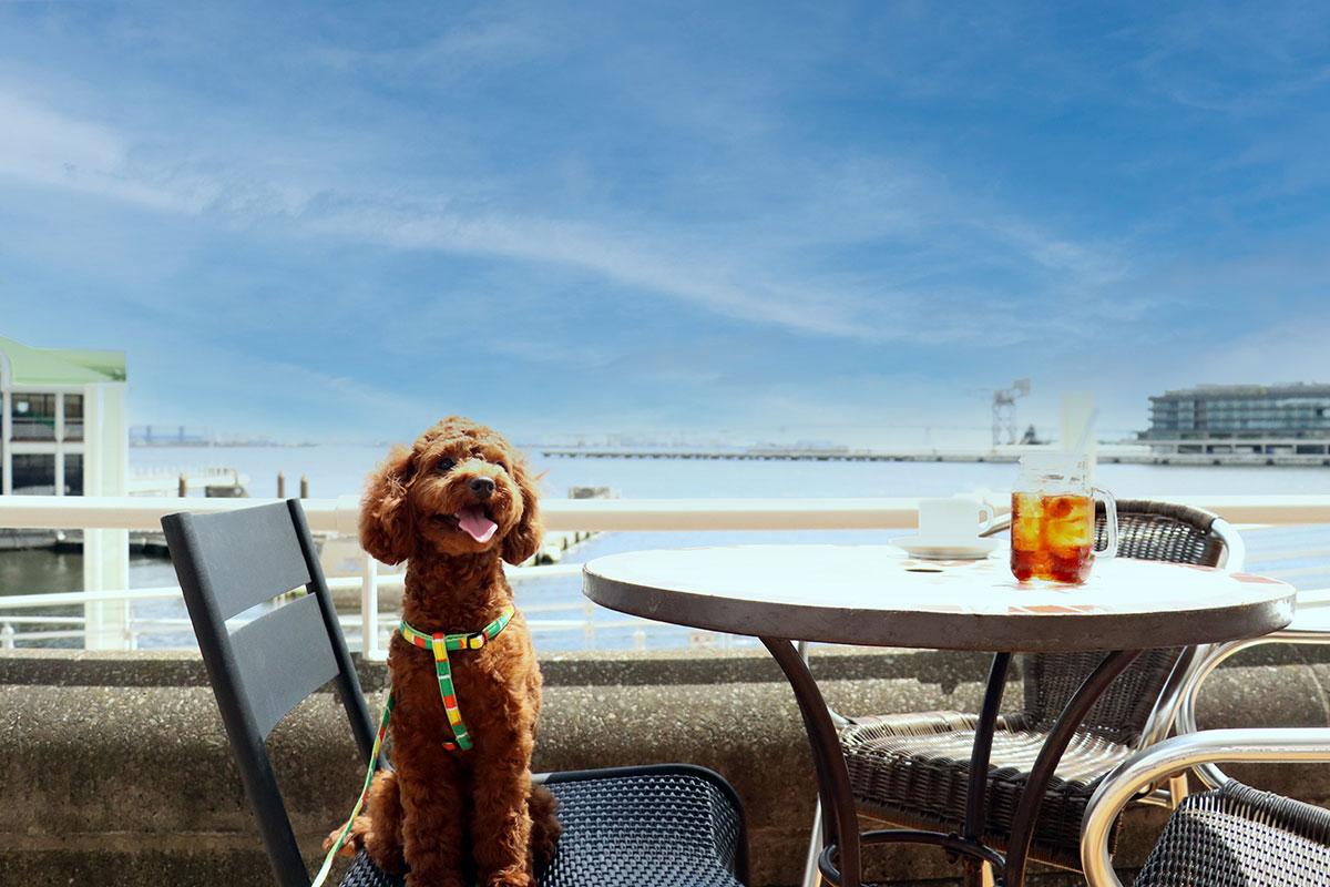 横浜のインターコンチネンタルホテルに海が見える「ドッグフレンドリーテラス」限定オープン!