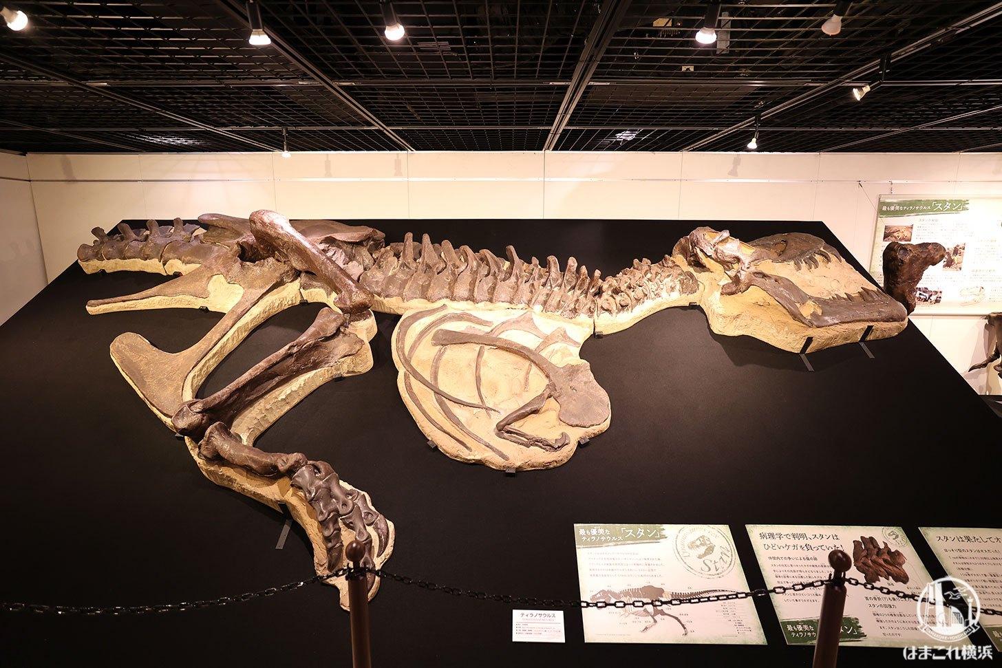 ティラノサウルス「スタン」
