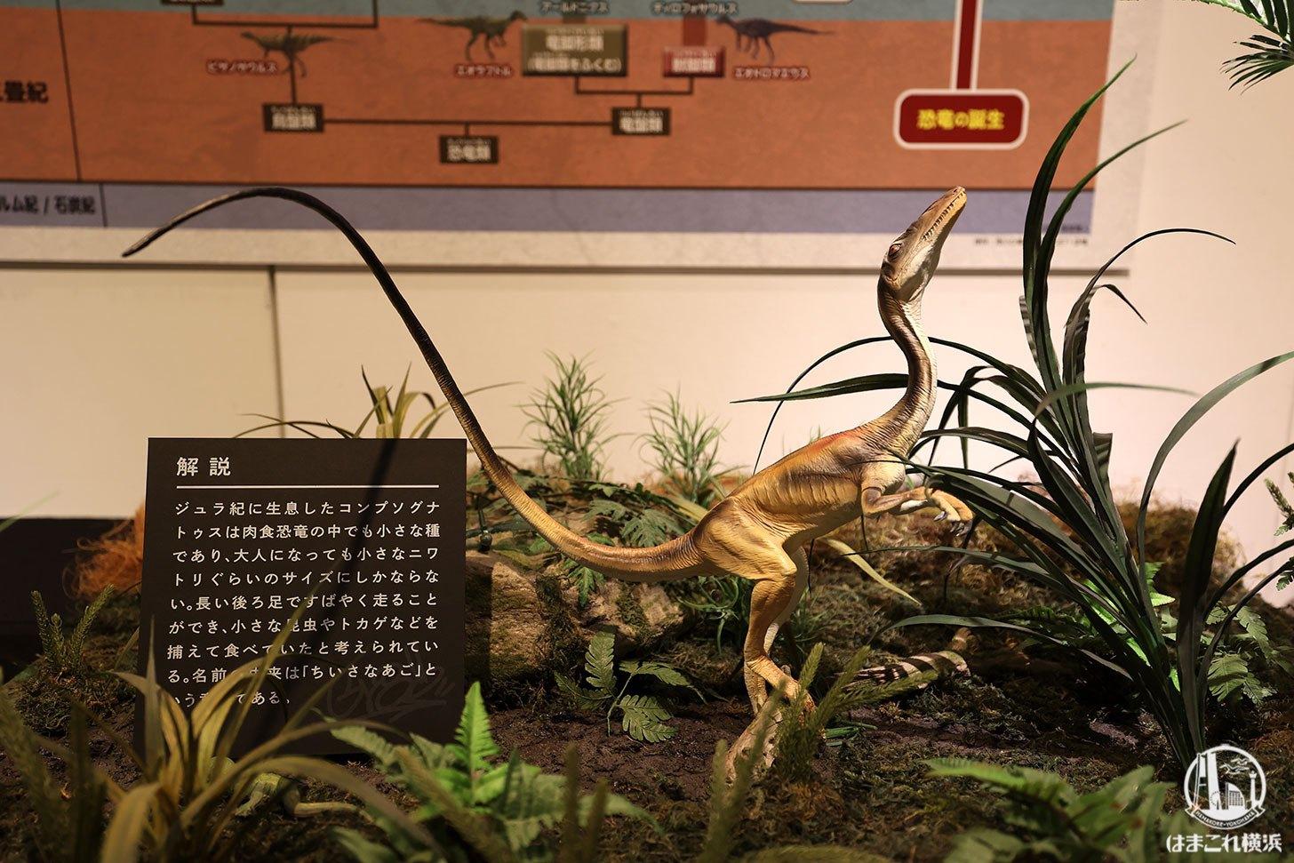 恐竜から鳥へ進化した展示