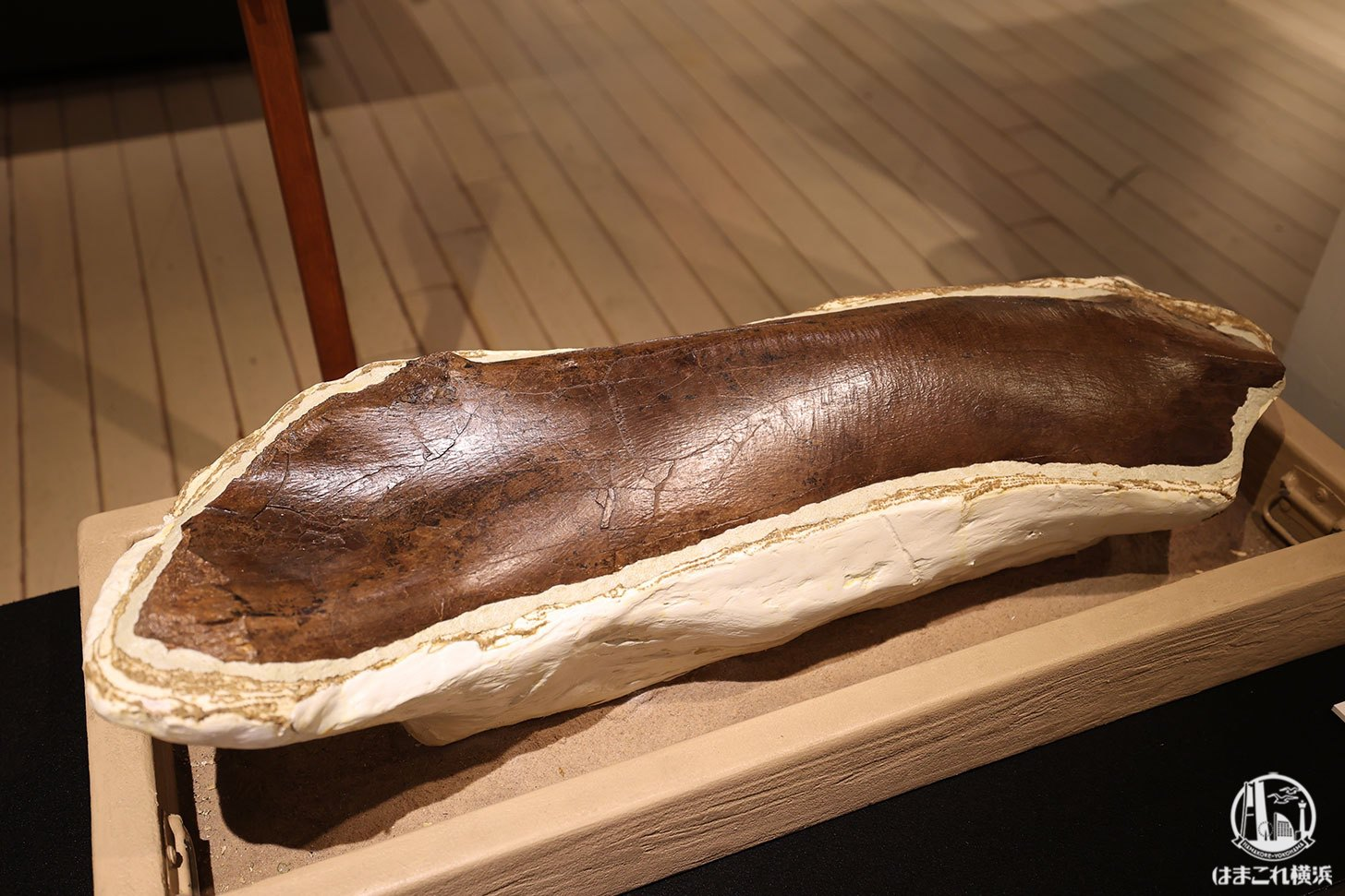 ティラノサウルスの大腿骨