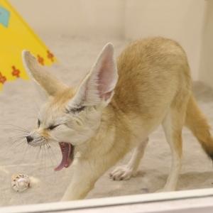 アニタッチみなとみらい・横浜ワールドポーターズは室内で動物とふれあえる癒しスポット!