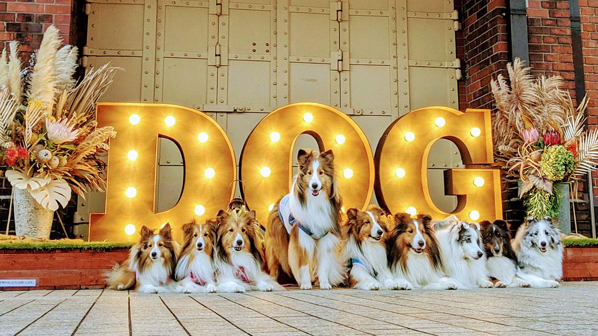 DOGのフォトスポット